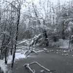 Snow Den (Film-Poem)