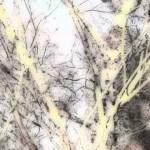 Schneeengeln (Film-Poem)