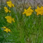A Poem for Spring