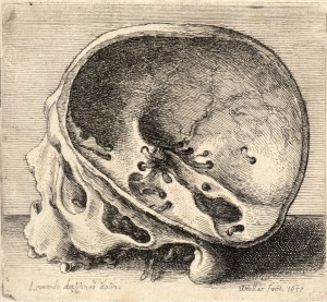 Skull with Top Removed by Leonardo DaVinci